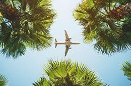 Flieger über Palmen
